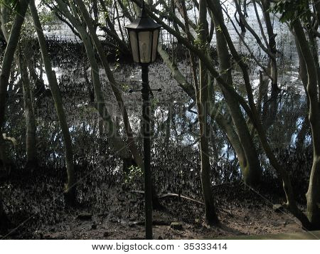 Mangrove street lantern