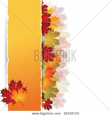 EPS10 Autumn maple leaves background. Vector illustration.