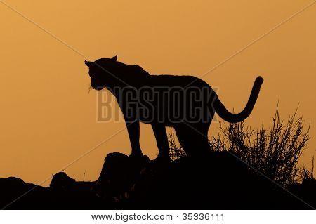 Silueta de leopardo