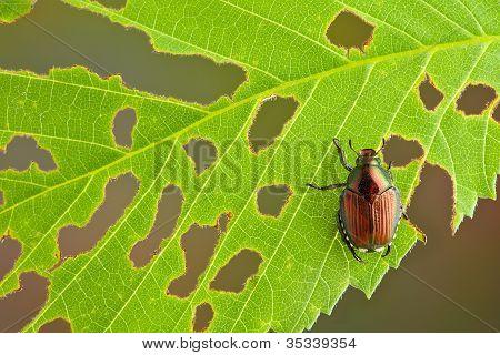 Käfer am Blatt