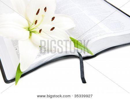 Easter Lily und Bibel