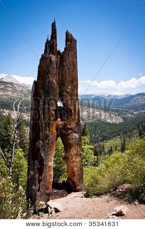 Tree In Yosemite National Park