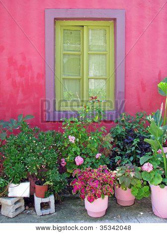 Flower pots under the window
