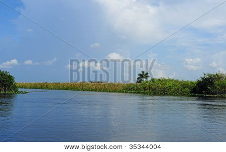 Lush Greenery On Lake Or Swamp Scenery