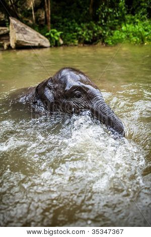 Baby elephant sits in the middle of the waterfall, river