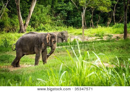 Elephants stand in the middle of the forest grassland looking into distance.