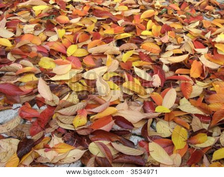 Autumnal Carpet