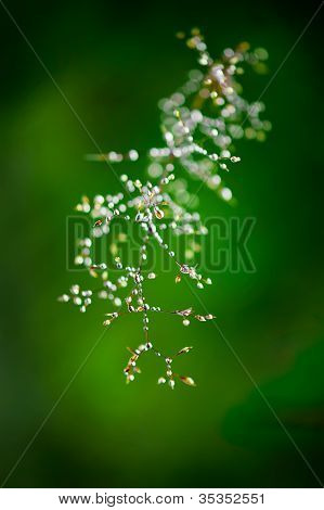 Morning Dew. Shining Water Drops On Grass Over Green Forest Background