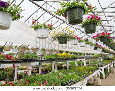 Flowers growing in foil hothouse of garden center