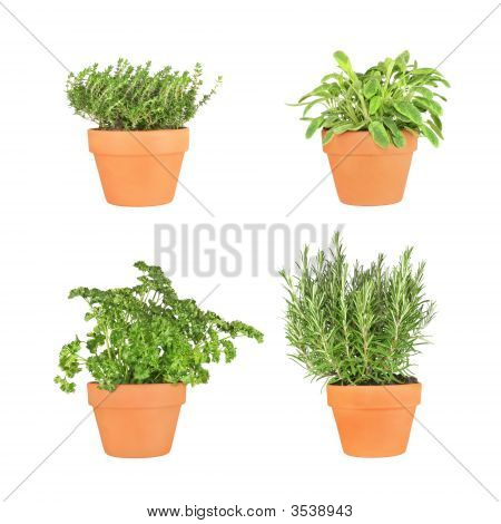 Parsley, Sage, Rosemary And Thyme Herbs