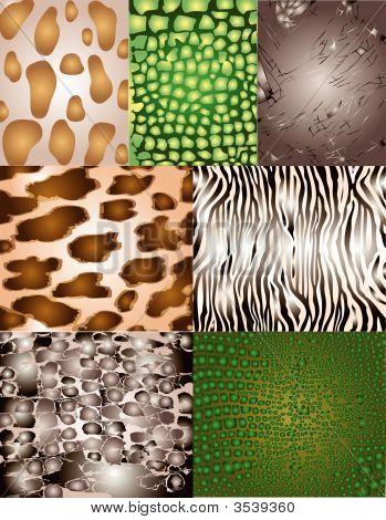Vector Design Element Backgrounds