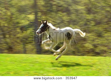 Sir Lance In Flight