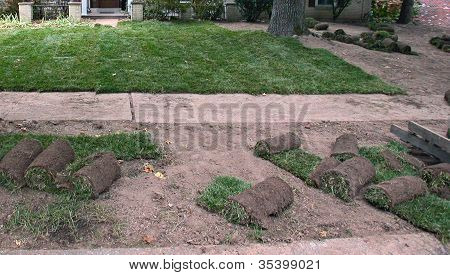 Sod for a new lawn