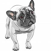 Vector Sketch Domestic Dog French Bulldog Breed poster
