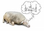 pic of counting sheep  - Funny concept of cute sheep with lots of wool isolated on white counting hand drawn human stickfigures jumping over a fence to fall asleep - JPG