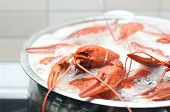 picture of crawdads  - some crawfish cooking in a large pot