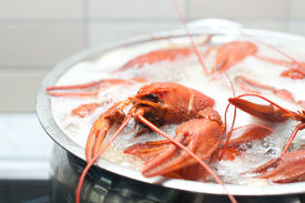 picture of crawdads  - some crawfish cooking in a large pot  - JPG