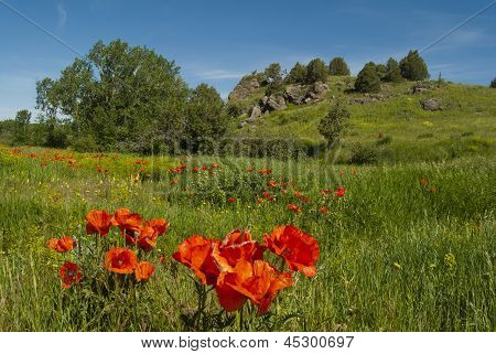 High Country Meadow