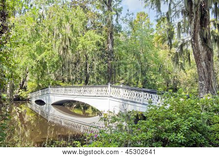 Magnolia Plantations Pond Bridge