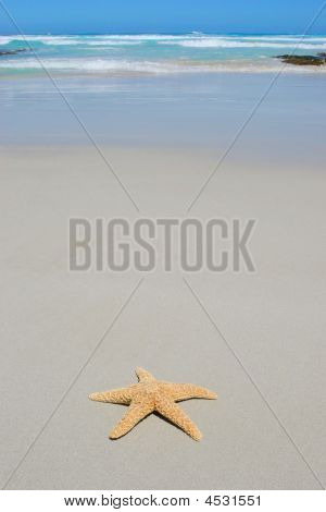 Starfish On A Pristine Beach With Ocean In Background