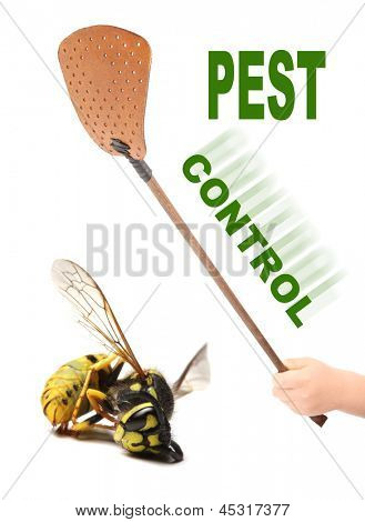 Flyswatter and dead yellow jacket wasp. Ecological pest control.  Picture with space for your text.