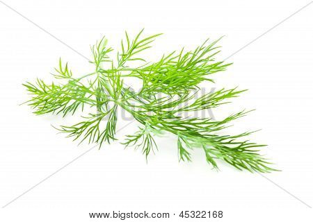 Dill Isolated