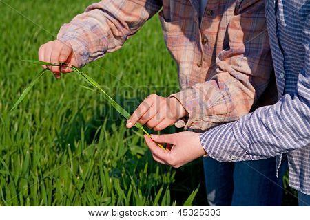 Women In Wheat Field