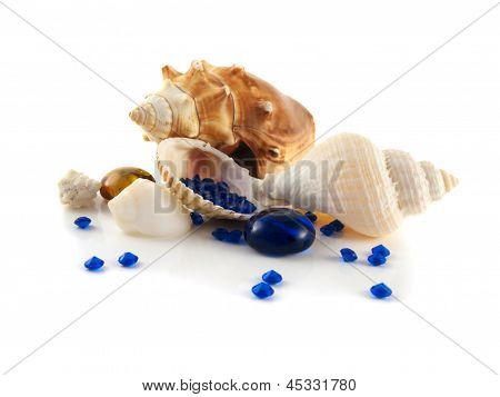 Sea shells isolated on white background