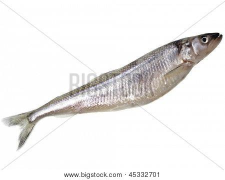fresh smelts fish ( Osmerus eperlanus) isolated on white background