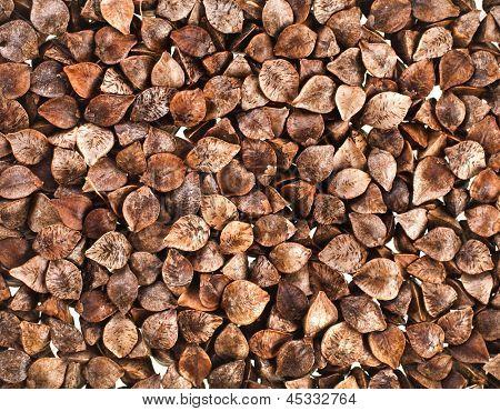 buckwheat raw seeds close up macro shot background