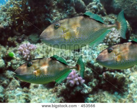 Parrot Fish Reef