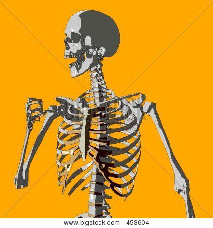 Bone 93