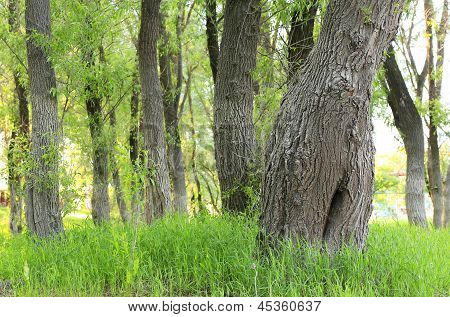 Meadow with trees