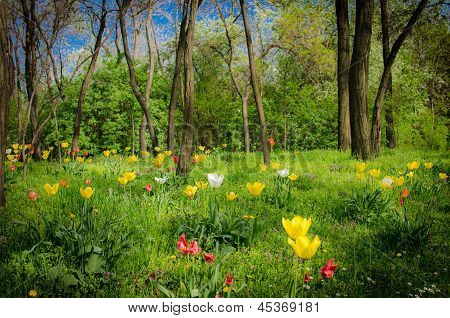 mystic forest with flowers