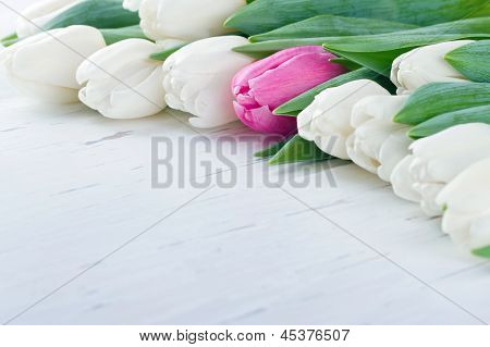 Single Pink Tulip Among White Tulips