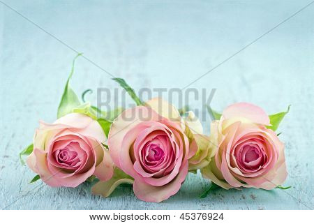 Three Pink Roses On Light Blue Background