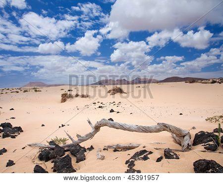 Norte de Fuerteventura, dunas de Corralejo