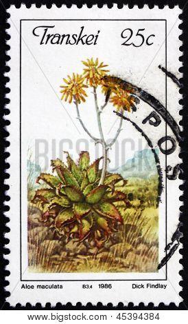 Estampilla Transkei, Sudáfrica 1986 jabón Aloe