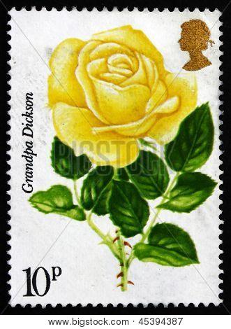 Postage Stamp Gb 1976 Grandpa Dickson, Painted Rose