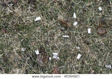 Cigarette Butts On Ground