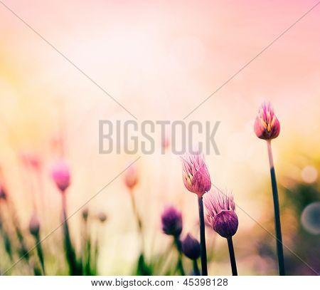 Flores de cebollino