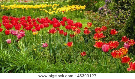 Schneise der Tulpen