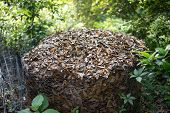 pic of chicken-wire  - Compost heap consisting of live oak leaves in a chicken wire enclosure outdoors - JPG