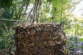 image of chicken-wire  - Compost heap consisting of live oak leaves in a chicken wire enclosure outdoors - JPG