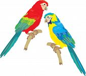 Blue Yellow And Red Blue Macaw Parrots Isolated On White Background