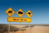 stock photo of wombat  - Kangaroo wombat and camel warning sign Australia - JPG