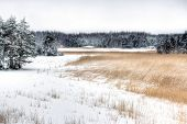 Landscape Of Rural Meadow And Snowy Forest