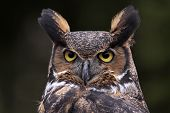 stock photo of owl eyes  - A close - JPG