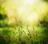 stock photo of meadows  - Spring or summer abstract nature background with grass in the meadow and sunset in the back - JPG