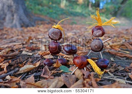 Chestnut Family